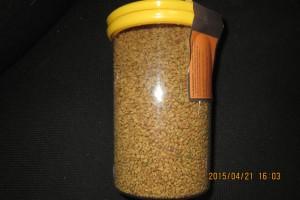 Семена фенугрека (пажитника)