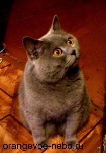 ошарашенное лицо кота, в момент, когда дети слопали сваренную для него еду)))