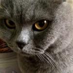 Жизнь и быт кота- сыроеда:))