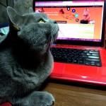 Как перевести на сыроедение …. кота!